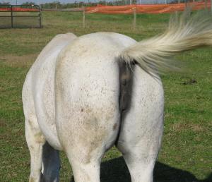 I like horses...